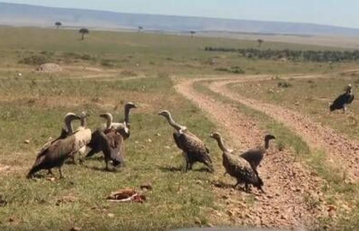 النسور تشن غارة على ظبي وتمزقه إربا (فيديو)
